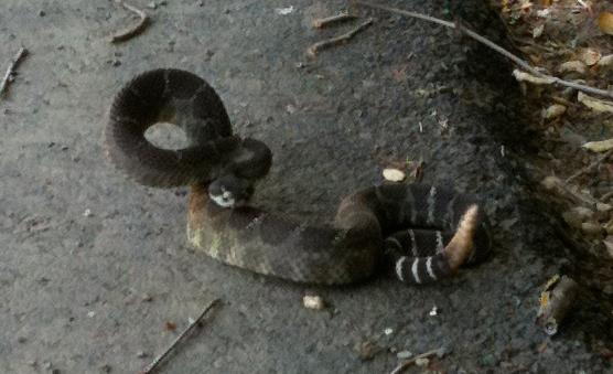 big-angry-snake