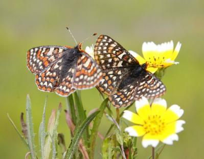 butterfly_mjm_131399x310