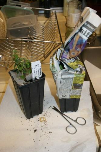 hcgpackedplants