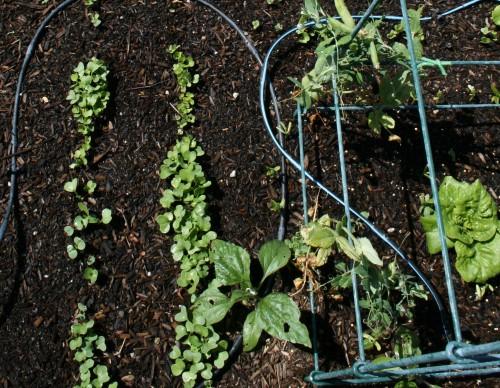 seedlings2009